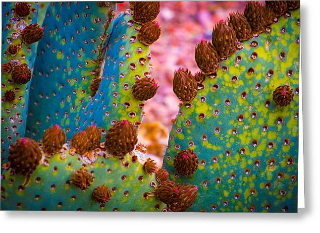 Psychedelic Cactus Greeting Card