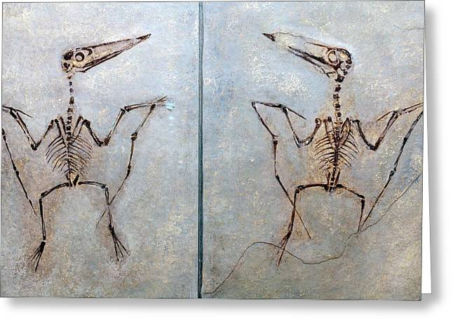 Pterodactylus Antiquus Greeting Card by Dirk Wiersma