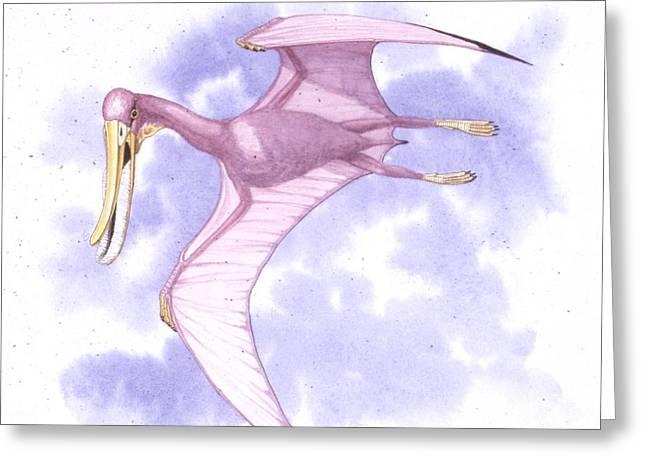 Pterodaustro Pterosaur Greeting Card