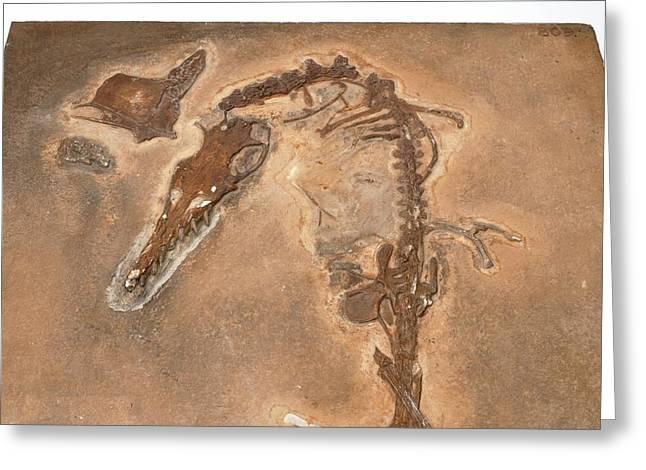 Pterosaur Fossil Greeting Card