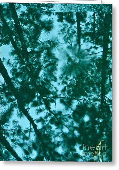 Puddle Of Pines Greeting Card by Joy Hardee