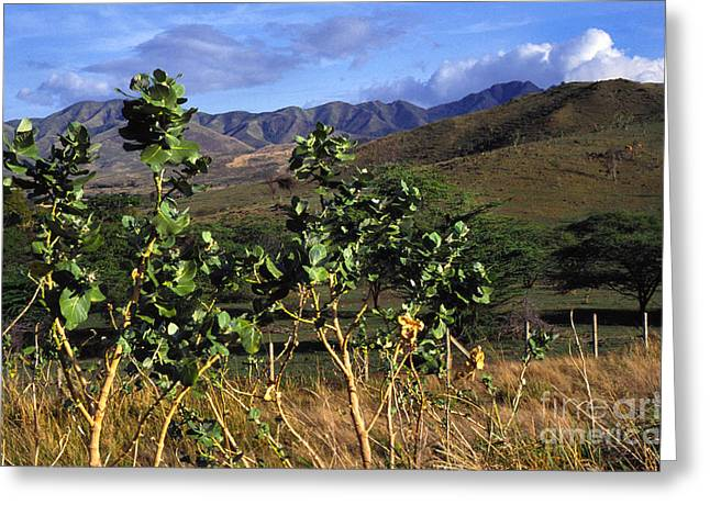 Puerto Rico Cayey Mountains Near Salinas Greeting Card by Thomas R Fletcher