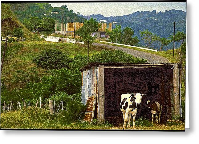 Puerto Rico Countryside Greeting Card
