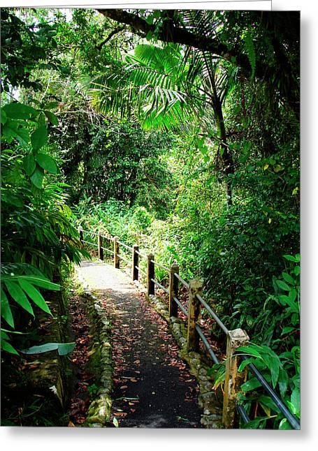 Puerto Rico, Luquillo, El Yunque Greeting Card by Miva Stock