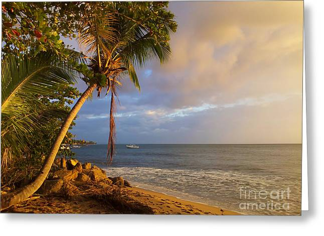 Puerto Rico Palm Lined Beach With Boat At Sunset Greeting Card