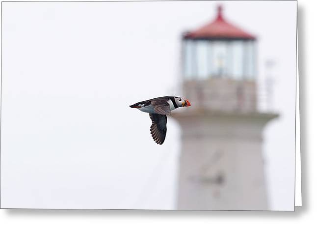 Puffin And Light. Greeting Card