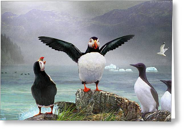 Puffin Pano Greeting Card by R christopher Vest