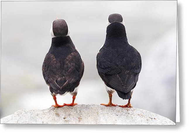 Puffin Philosophers Greeting Card