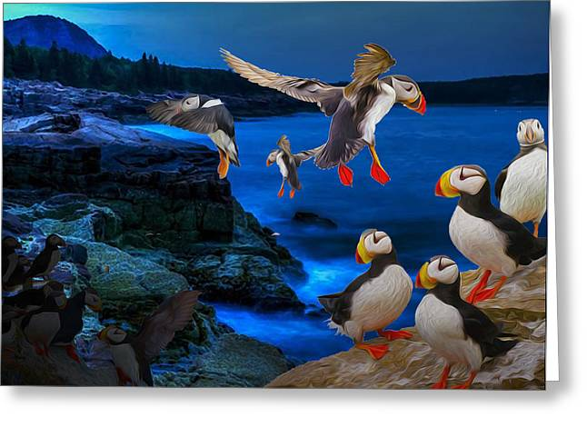 Puffins Bedding Down Greeting Card
