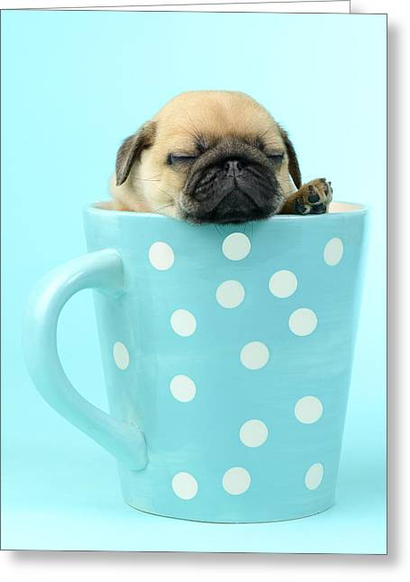 Pug In A Cup Greeting Card by Greg Cuddiford