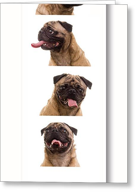 Pug Photo Booth Greeting Card by Edward Fielding