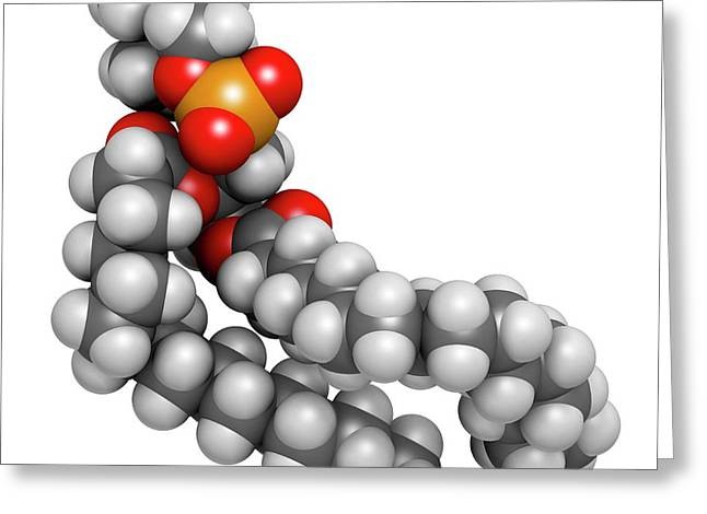 Pulmonary Surfactant Molecule Greeting Card