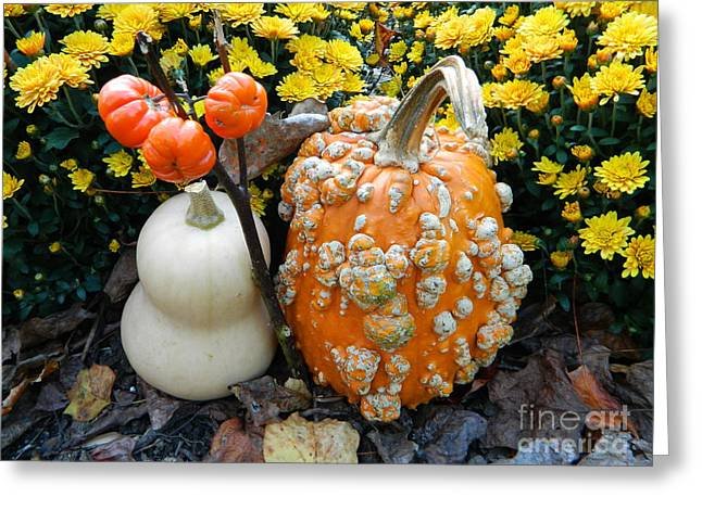 Pumpkin And Squash Greeting Card by Emmy Marie Vickers