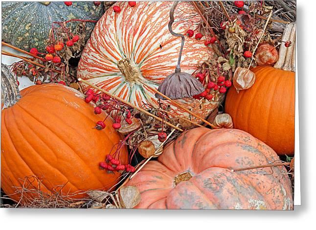 Pumpkin Beauty Greeting Card