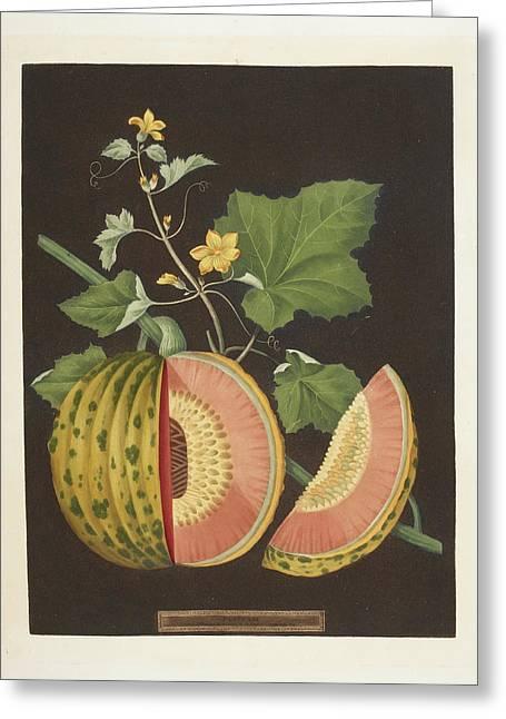 Pumpkin Greeting Card by British Library