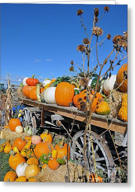 Greeting Card featuring the photograph Pumpkin Farm by Minnie Lippiatt