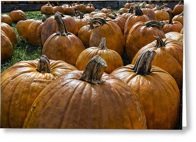 Pumpkin Farm Greeting Card