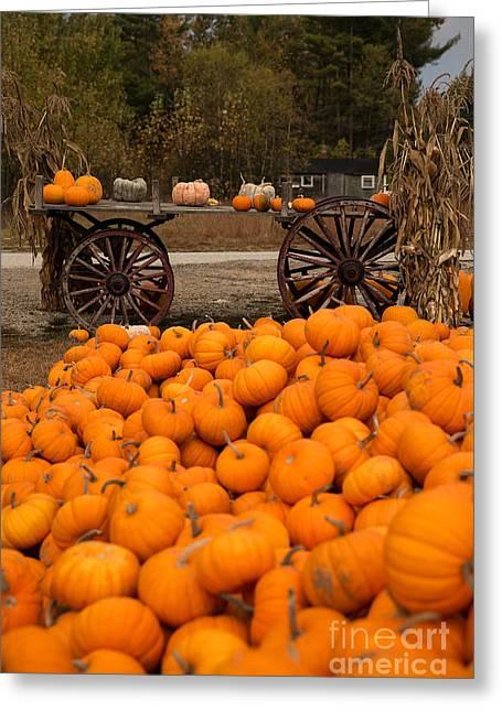 Pumpkin Harvest Greeting Card by Brenda Giasson