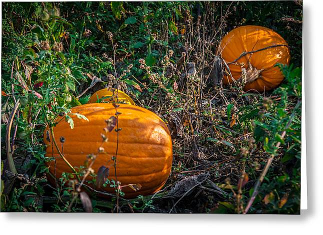 Pumpkin Patch Greeting Card by Gene Sherrill