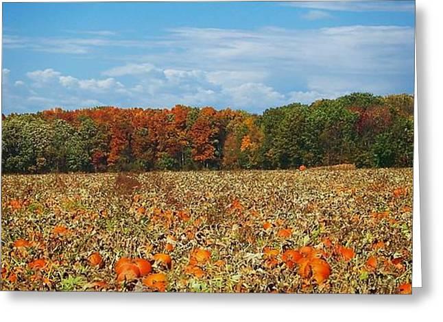 Pumpkin Patch - Panorama Greeting Card