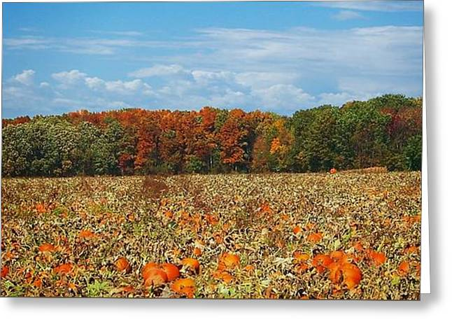 Pumpkin Patch - Panorama Greeting Card