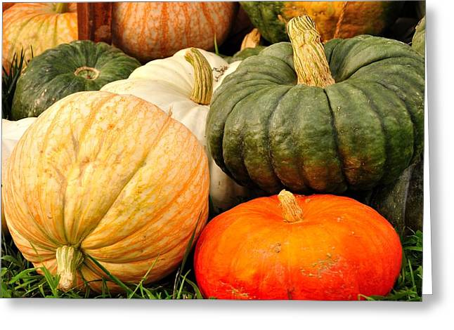 Pumpkin Pleasure Greeting Card by Gene Sherrill
