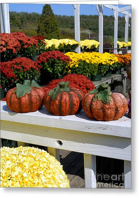 Pumpkins And Fall Flowers Greeting Card by Amy Cicconi