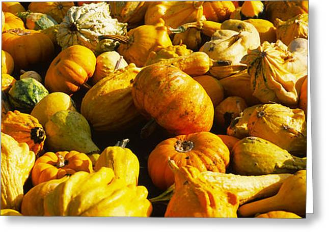Pumpkins And Gourds In A Farm, Half Greeting Card by Panoramic Images