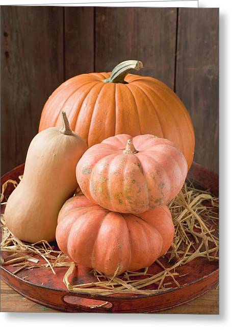 Pumpkins And Squashes On Old Tray In Front Of Wooden Wall Greeting Card