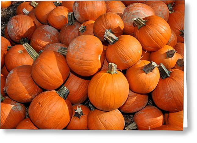 Pumpkins Greeting Card by Diane Lent