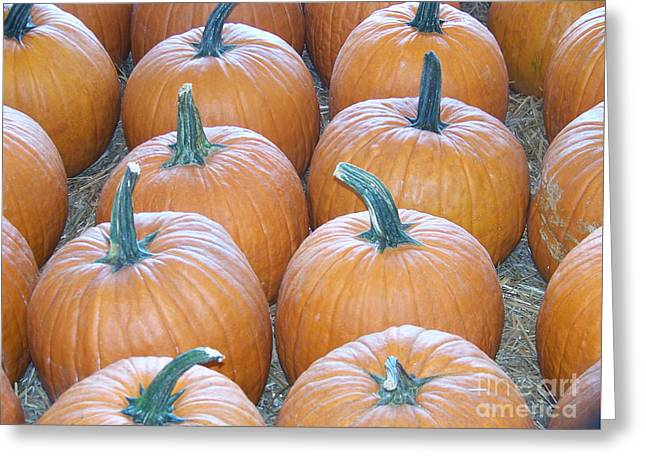 Pumpkins Galore Greeting Card by Kevin Croitz