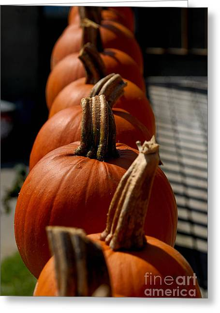 Pumpkins In A Row Greeting Card by Amy Cicconi