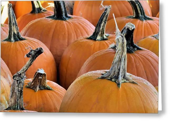 Pumpkins Greeting Card by Janice Drew