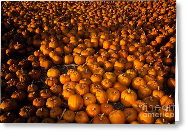 Pumpkins Greeting Card by Ron Sanford
