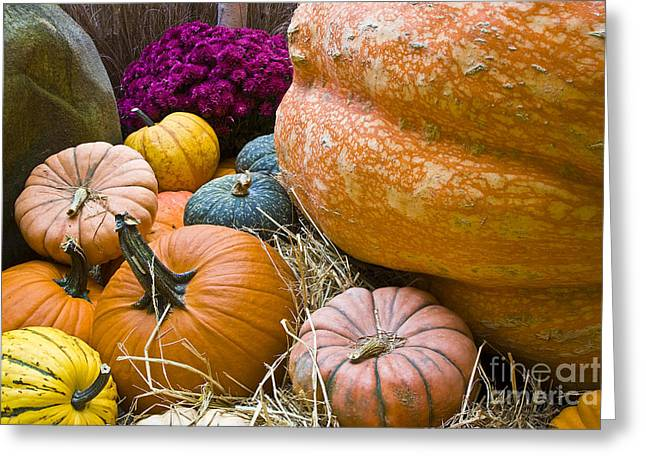 Pumpkins Greeting Card by Tim Hightower