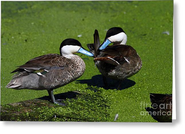 Puna Teal Greeting Card by James Brunker