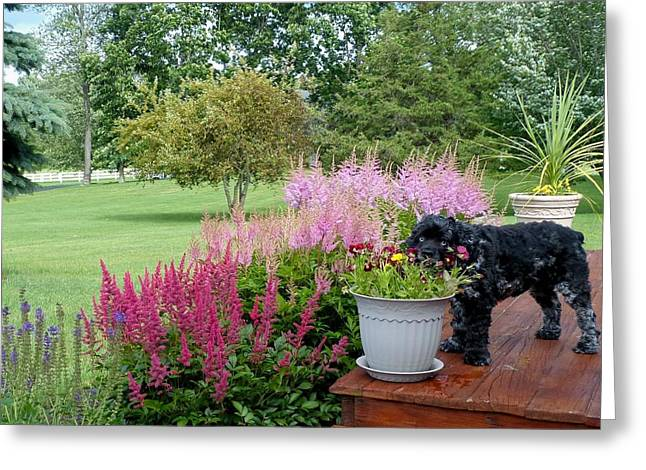 Pup And Flowers Greeting Card