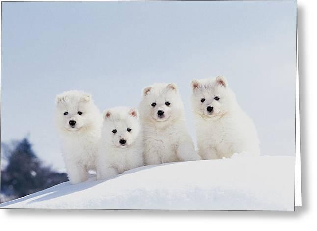 Puppies In Snow Greeting Card by Mitsuyoshi  Tatematsu