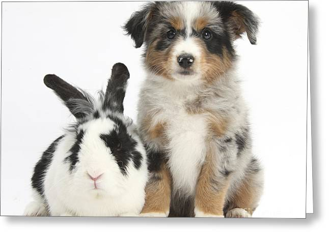 Puppy & Rabbit Greeting Card by Mark Taylor