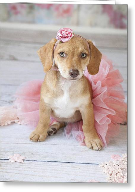 Puppy Ballerina Greeting Card by Lisa Jane