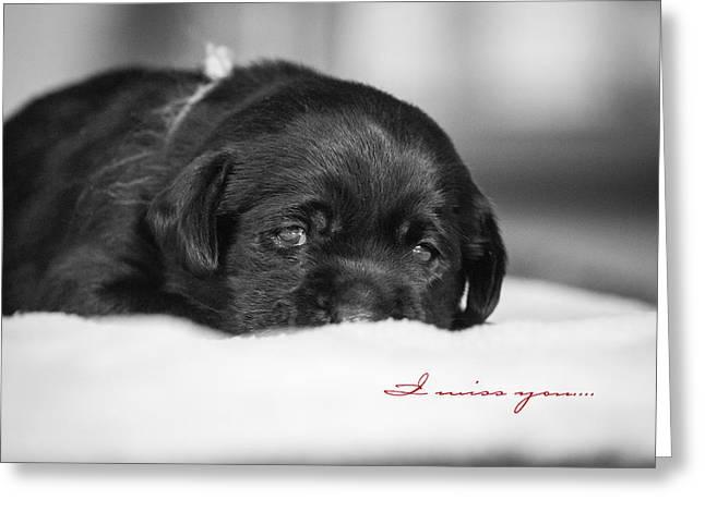 Puppy Black Lab  Greeting Card by Toni Thomas