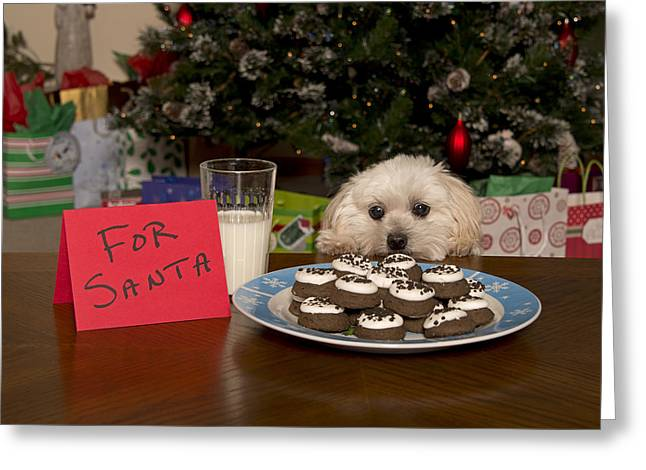 Puppy Checking Out Christmas Cookies Greeting Card