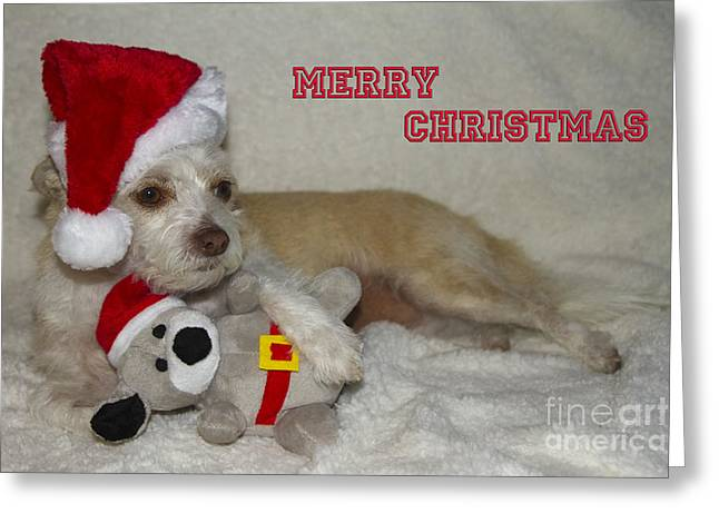 Puppy Christmas Toy Greeting Card