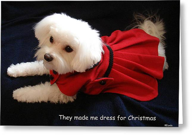 Greeting Card featuring the photograph Puppy Coat by Mary Beth Landis