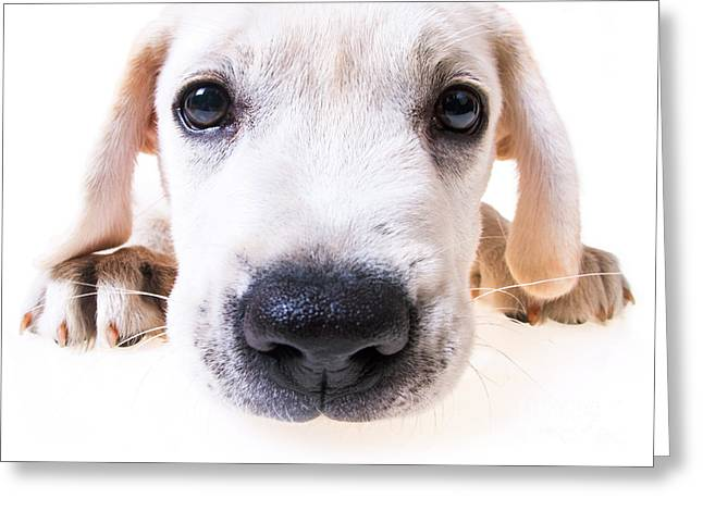 Puppy Face Greeting Card by Diane Diederich