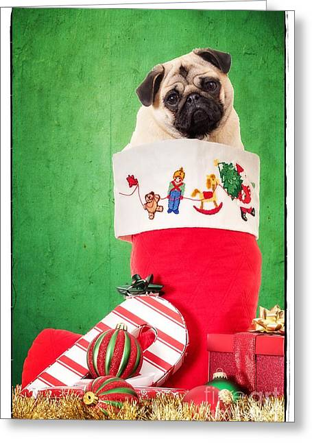 Puppy For Christmas Greeting Card by Edward Fielding