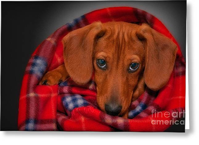 Puppy Love Greeting Card by Susan Candelario