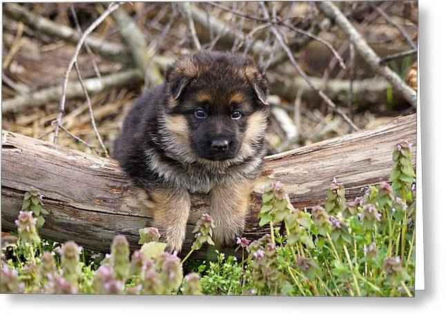 Puppy On A Log Greeting Card by Sandy Keeton