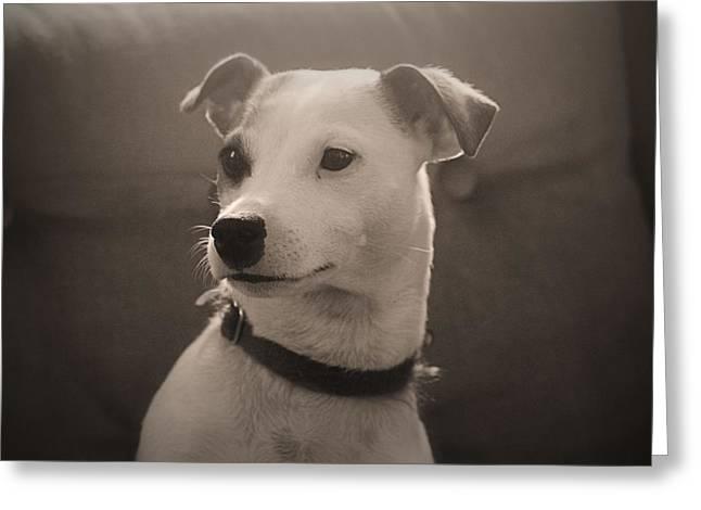 Puppy Portrait Greeting Card by Carolyn Ricks