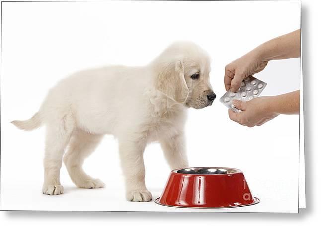 Puppy Receiving Medicine Greeting Card by Jean-Michel Labat